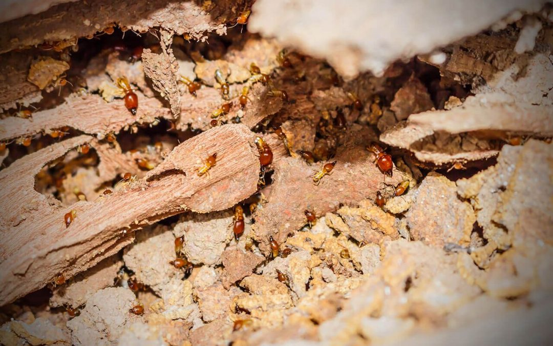 Top 5 Signs of a Termite Infestation