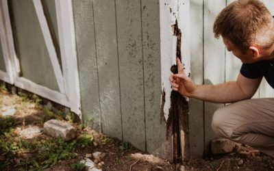A Home Inspector's Role Series – Inspecting the Grounds…